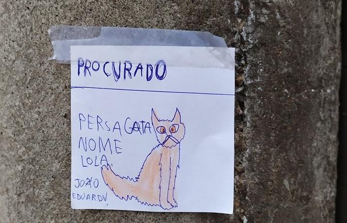 Final feliz: gata de menino que espalhou desenhos por Blumenau é encontrada - O Munícipio