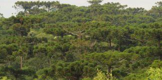 motivos árvores em extinção brusque