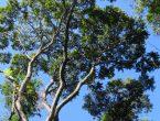 árvores em extinção brusque